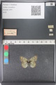 http://mczbase.mcz.harvard.edu/specimen_images/ent-lepidoptera/images/2011_03_23/IMG_078486.JPG