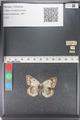 http://mczbase.mcz.harvard.edu/specimen_images/ent-lepidoptera/images/2011_03_23/IMG_078487.JPG