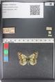 http://mczbase.mcz.harvard.edu/specimen_images/ent-lepidoptera/images/2011_03_23/IMG_078488.JPG