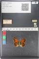 http://mczbase.mcz.harvard.edu/specimen_images/ent-lepidoptera/images/2011_03_23/IMG_078492.JPG