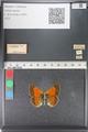 http://mczbase.mcz.harvard.edu/specimen_images/ent-lepidoptera/images/2011_03_23/IMG_078494.JPG
