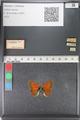 http://mczbase.mcz.harvard.edu/specimen_images/ent-lepidoptera/images/2011_03_23/IMG_078495.JPG