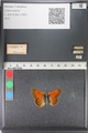 http://mczbase.mcz.harvard.edu/specimen_images/ent-lepidoptera/images/2011_03_23/IMG_078499.JPG