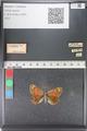 http://mczbase.mcz.harvard.edu/specimen_images/ent-lepidoptera/images/2011_03_23/IMG_078500.JPG