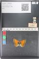 http://mczbase.mcz.harvard.edu/specimen_images/ent-lepidoptera/images/2011_03_23/IMG_078501.JPG