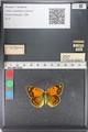 http://mczbase.mcz.harvard.edu/specimen_images/ent-lepidoptera/images/2011_03_23/IMG_078503.JPG