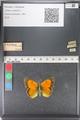 http://mczbase.mcz.harvard.edu/specimen_images/ent-lepidoptera/images/2011_03_23/IMG_078505.JPG