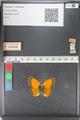http://mczbase.mcz.harvard.edu/specimen_images/ent-lepidoptera/images/2011_03_23/IMG_078506.JPG