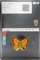 http://mczbase.mcz.harvard.edu/specimen_images/ent-lepidoptera/images/2011_03_23/IMG_078508.JPG