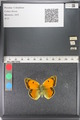 http://mczbase.mcz.harvard.edu/specimen_images/ent-lepidoptera/images/2011_03_23/IMG_078509.JPG