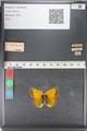 http://mczbase.mcz.harvard.edu/specimen_images/ent-lepidoptera/images/2011_03_23/IMG_078510.JPG