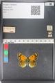 http://mczbase.mcz.harvard.edu/specimen_images/ent-lepidoptera/images/2011_03_23/IMG_078511.JPG
