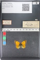 http://mczbase.mcz.harvard.edu/specimen_images/ent-lepidoptera/images/2011_03_23/IMG_078512.JPG