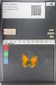 http://mczbase.mcz.harvard.edu/specimen_images/ent-lepidoptera/images/2011_03_23/IMG_078513.JPG