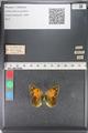 http://mczbase.mcz.harvard.edu/specimen_images/ent-lepidoptera/images/2011_03_23/IMG_078514.JPG