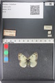 http://mczbase.mcz.harvard.edu/specimen_images/ent-lepidoptera/images/2011_03_23/IMG_078516.JPG