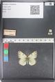 http://mczbase.mcz.harvard.edu/specimen_images/ent-lepidoptera/images/2011_03_23/IMG_078517.JPG