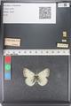 http://mczbase.mcz.harvard.edu/specimen_images/ent-lepidoptera/images/2011_03_23/IMG_078518.JPG