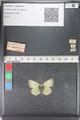 http://mczbase.mcz.harvard.edu/specimen_images/ent-lepidoptera/images/2011_03_23/IMG_078521.JPG