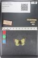 http://mczbase.mcz.harvard.edu/specimen_images/ent-lepidoptera/images/2011_03_23/IMG_078522.JPG