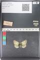 http://mczbase.mcz.harvard.edu/specimen_images/ent-lepidoptera/images/2011_03_23/IMG_078523.JPG