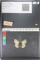 http://mczbase.mcz.harvard.edu/specimen_images/ent-lepidoptera/images/2011_03_23/IMG_078524.JPG
