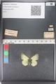 http://mczbase.mcz.harvard.edu/specimen_images/ent-lepidoptera/images/2011_03_23/IMG_078525.JPG