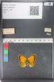http://mczbase.mcz.harvard.edu/specimen_images/ent-lepidoptera/images/2011_03_23/IMG_078526.JPG