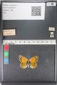 http://mczbase.mcz.harvard.edu/specimen_images/ent-lepidoptera/images/2011_03_23/IMG_078527.JPG