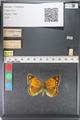 http://mczbase.mcz.harvard.edu/specimen_images/ent-lepidoptera/images/2011_03_23/IMG_078528.JPG