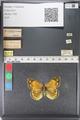http://mczbase.mcz.harvard.edu/specimen_images/ent-lepidoptera/images/2011_03_23/IMG_078529.JPG