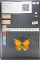 http://mczbase.mcz.harvard.edu/specimen_images/ent-lepidoptera/images/2011_03_23/IMG_078530.JPG