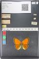 http://mczbase.mcz.harvard.edu/specimen_images/ent-lepidoptera/images/2011_03_23/IMG_078531.JPG