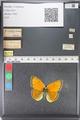 http://mczbase.mcz.harvard.edu/specimen_images/ent-lepidoptera/images/2011_03_23/IMG_078533.JPG
