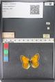 http://mczbase.mcz.harvard.edu/specimen_images/ent-lepidoptera/images/2011_03_23/IMG_078535.JPG