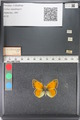 http://mczbase.mcz.harvard.edu/specimen_images/ent-lepidoptera/images/2011_03_23/IMG_078536.JPG