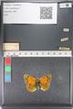 http://mczbase.mcz.harvard.edu/specimen_images/ent-lepidoptera/images/2011_03_23/IMG_078537.JPG
