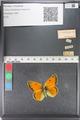 http://mczbase.mcz.harvard.edu/specimen_images/ent-lepidoptera/images/2011_03_23/IMG_078538.JPG