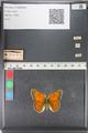 http://mczbase.mcz.harvard.edu/specimen_images/ent-lepidoptera/images/2011_03_23/IMG_078543.JPG