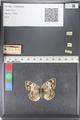 http://mczbase.mcz.harvard.edu/specimen_images/ent-lepidoptera/images/2011_03_23/IMG_078544.JPG