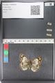 http://mczbase.mcz.harvard.edu/specimen_images/ent-lepidoptera/images/2011_03_23/IMG_078545.JPG