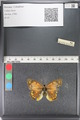 http://mczbase.mcz.harvard.edu/specimen_images/ent-lepidoptera/images/2011_03_23/IMG_078547.JPG