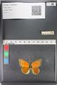 http://mczbase.mcz.harvard.edu/specimen_images/ent-lepidoptera/images/2011_03_23/IMG_078549.JPG