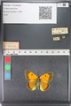 http://mczbase.mcz.harvard.edu/specimen_images/ent-lepidoptera/images/2011_03_23/IMG_078553.JPG