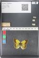 http://mczbase.mcz.harvard.edu/specimen_images/ent-lepidoptera/images/2011_03_23/IMG_078558.JPG