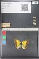 http://mczbase.mcz.harvard.edu/specimen_images/ent-lepidoptera/images/2011_03_23/IMG_078559.JPG