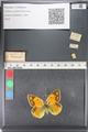http://mczbase.mcz.harvard.edu/specimen_images/ent-lepidoptera/images/2011_03_23/IMG_078561.JPG