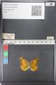 http://mczbase.mcz.harvard.edu/specimen_images/ent-lepidoptera/images/2011_03_27/IMG_079316.JPG