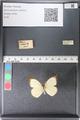 http://mczbase.mcz.harvard.edu/specimen_images/ent-lepidoptera/images/2011_03_29/IMG_079822.JPG