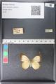 http://mczbase.mcz.harvard.edu/specimen_images/ent-lepidoptera/images/2011_03_29/IMG_079823.JPG